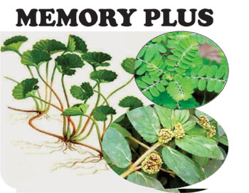 memory pikun herbal